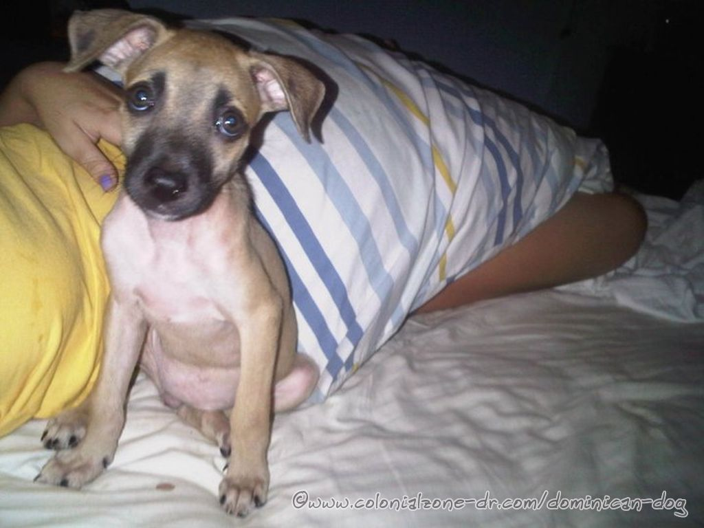 Parajito happy in bed