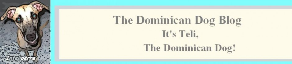 The Dominican Dog Blog