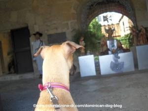 creche nativity scene casa reales with teli the dominican dog