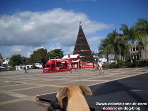 dominican dog at plaza espana christmas tree