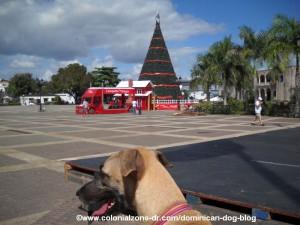 teli the dominican dog at plaza espana santo domingo christmas tree