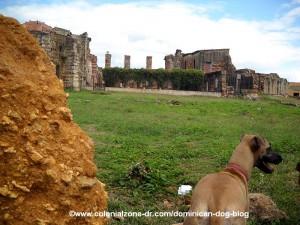 Teli looking at the ruins of san francisco