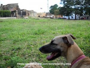 the yard at the ruinas de san francisco