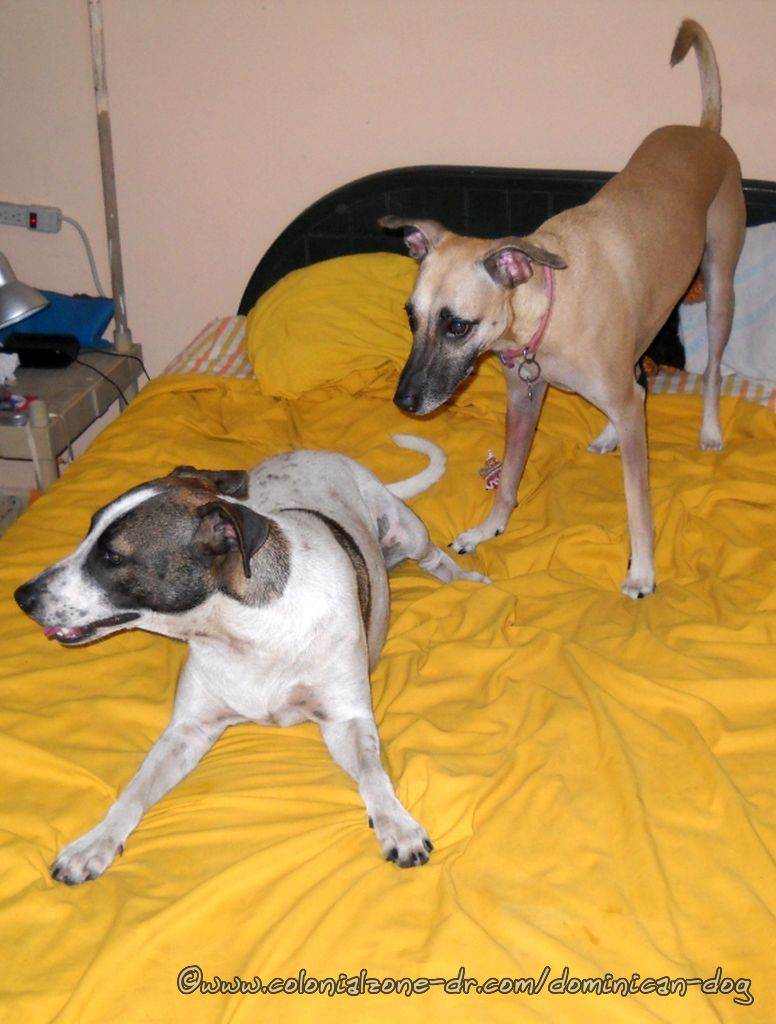Teli and Bertha playing on the bed