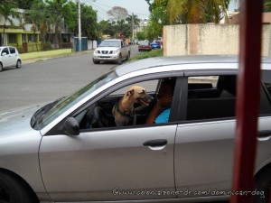 Teli sitting on taxi drivers lap