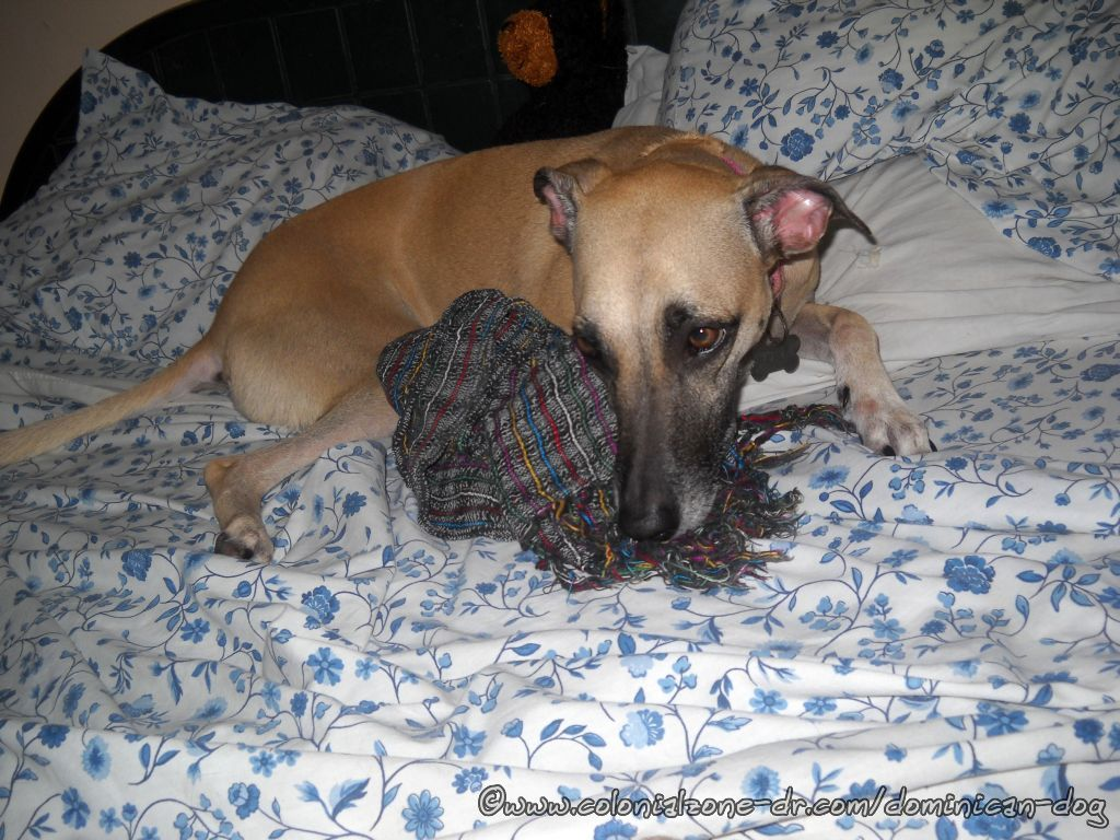 Teli holding the attack scarf