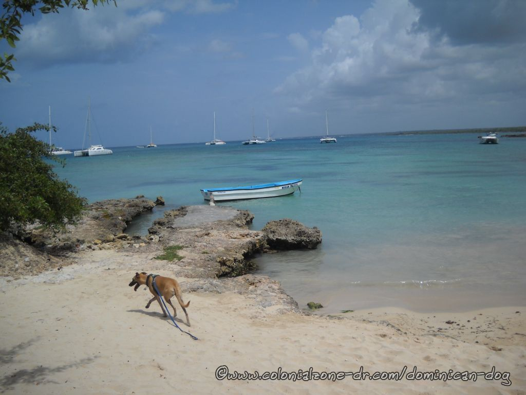 Checking out the Bayahibe area beach.