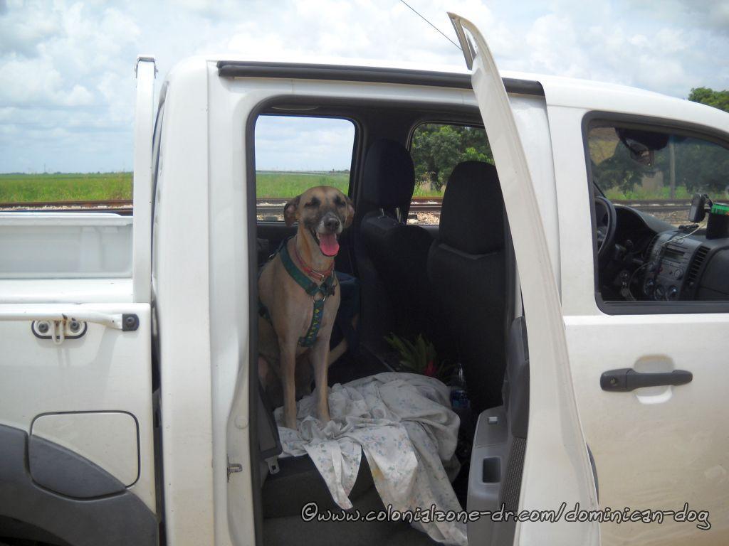 Teli resting in the truck