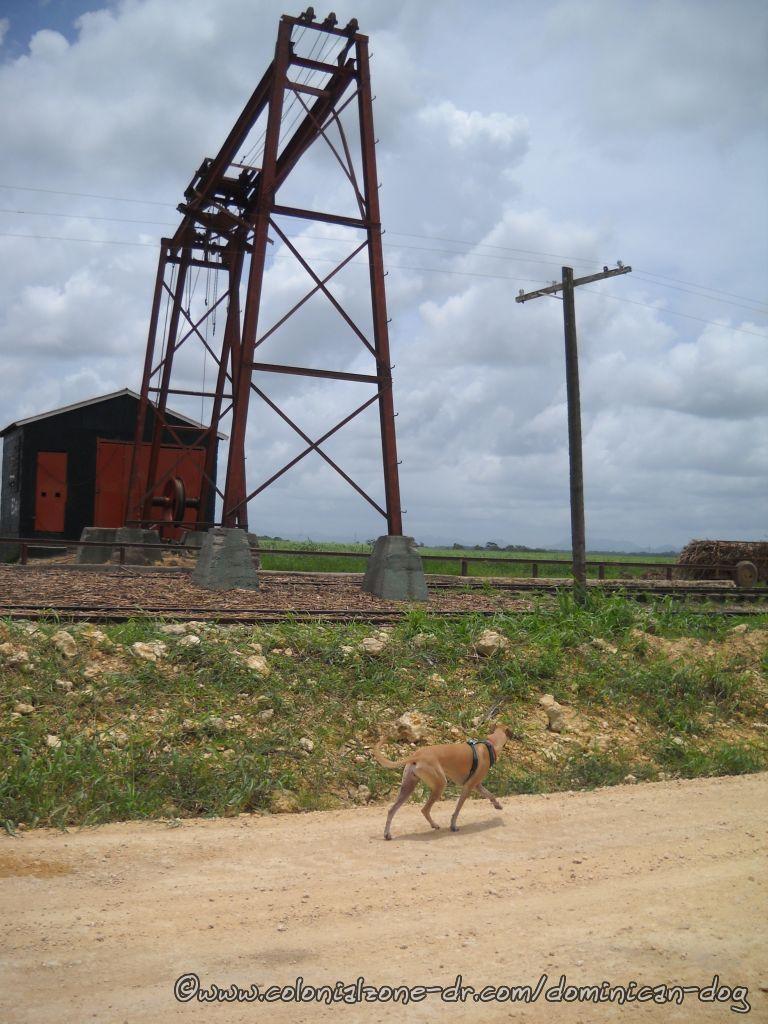 Teli in the Batey along the train tracks.
