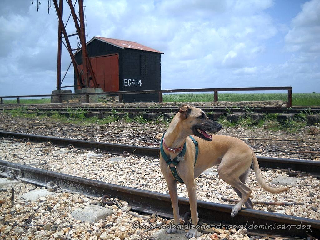 Teli checking out the wide open spaces on the railroad tracks