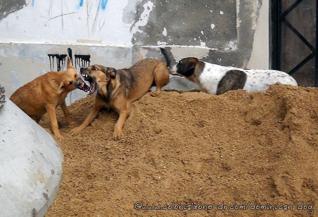 Bertha, Julio and Zippy playing.