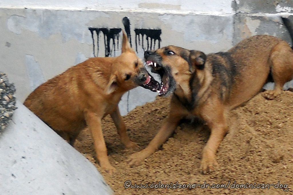 Julio and Zippy playing king of the hill. Don't they look frightening?