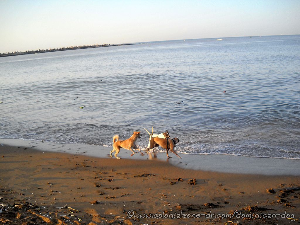 Bertha, Bowie and Teli on Playita Montecino in Zona Colonial