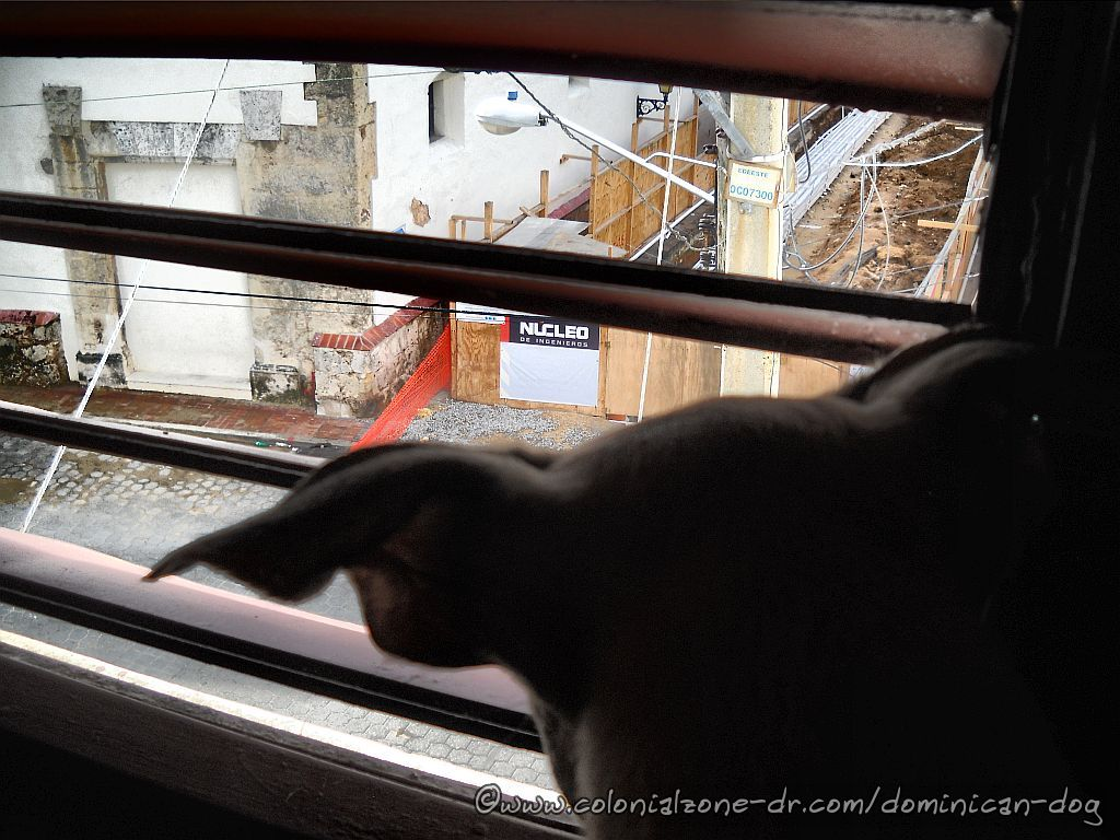 Teli checking out the construction for Renovada Ciudad Colonial