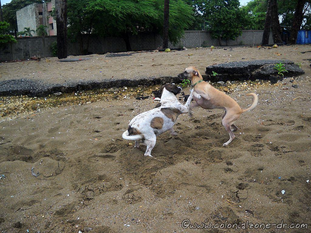 Teli and Bertha playing
