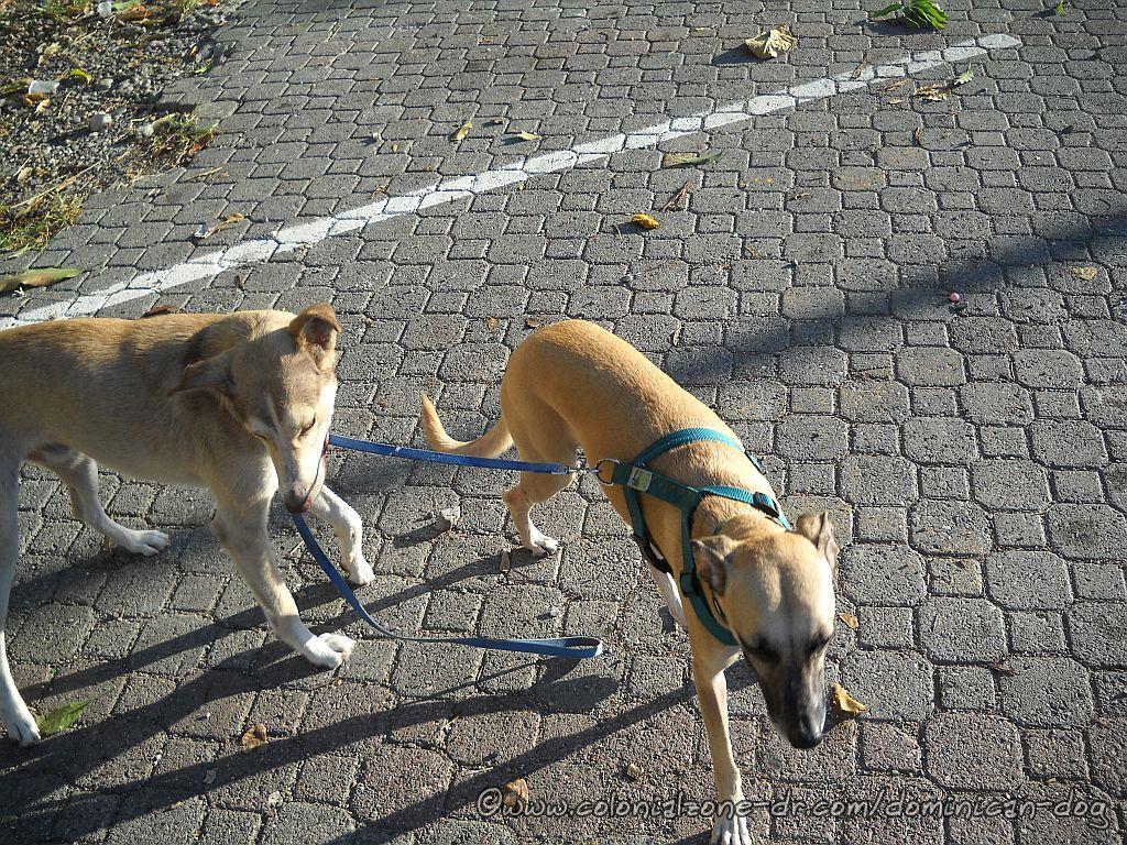 Buenagente walking her friend Teli on the leash.