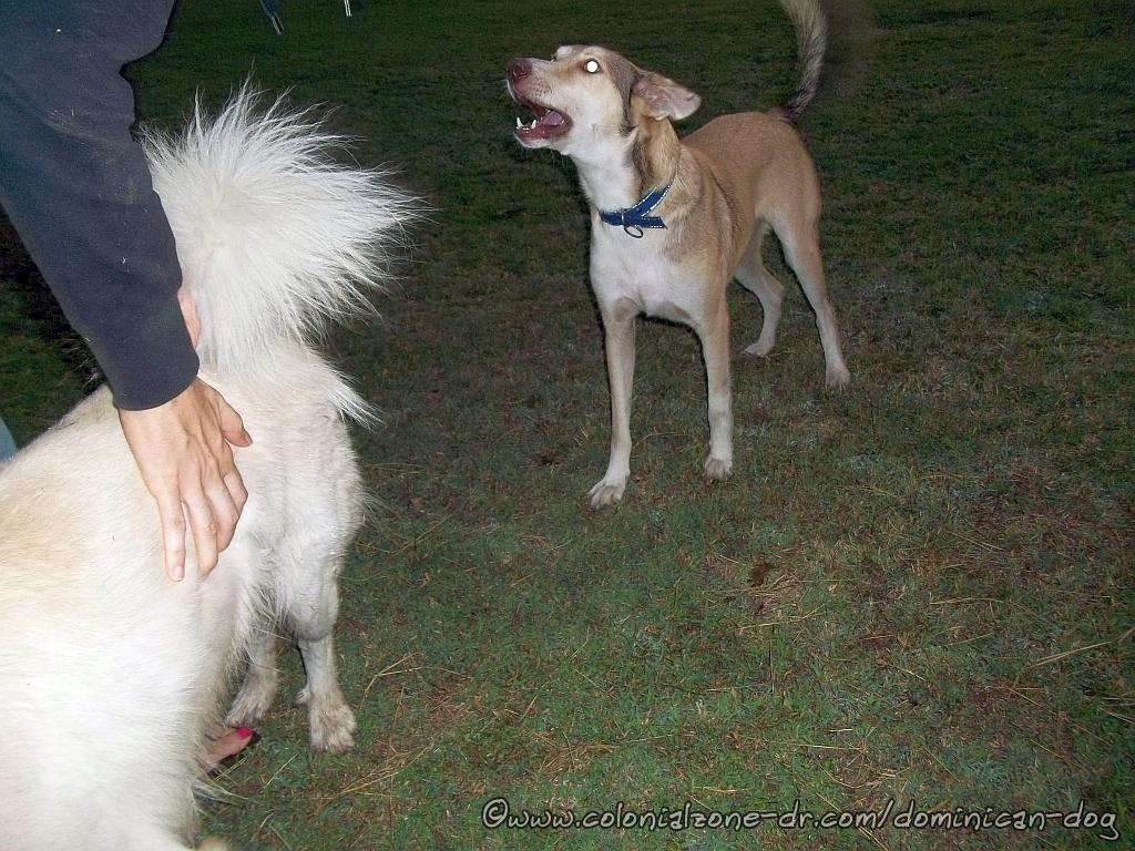 Buenagente was barking like he always does