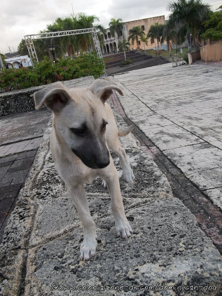 Happy has been living in Plaza España but she wants a forever home