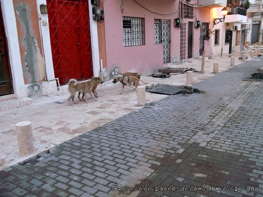 Teli, Bowie Zippy and Caliman playing on Calle Merino 2