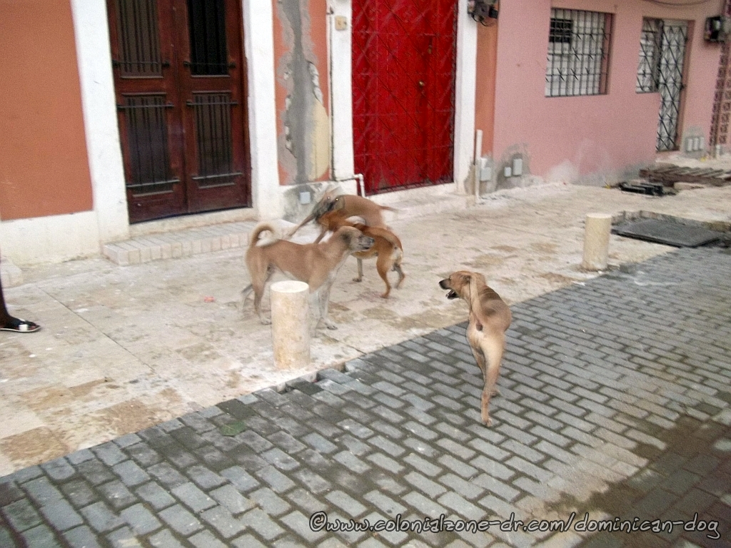 Teli, Bowie Zippy and Caliman playing on Calle Merino 1