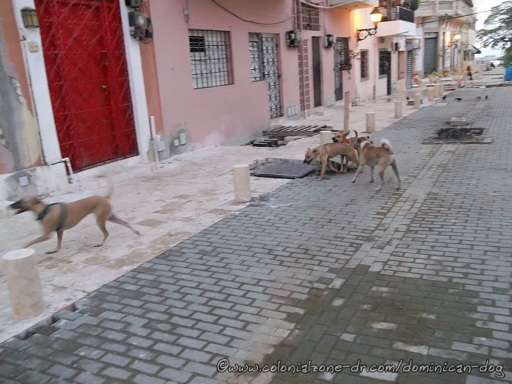 Teli, Bowie Zippy and Caliman playing on Calle Merino 3