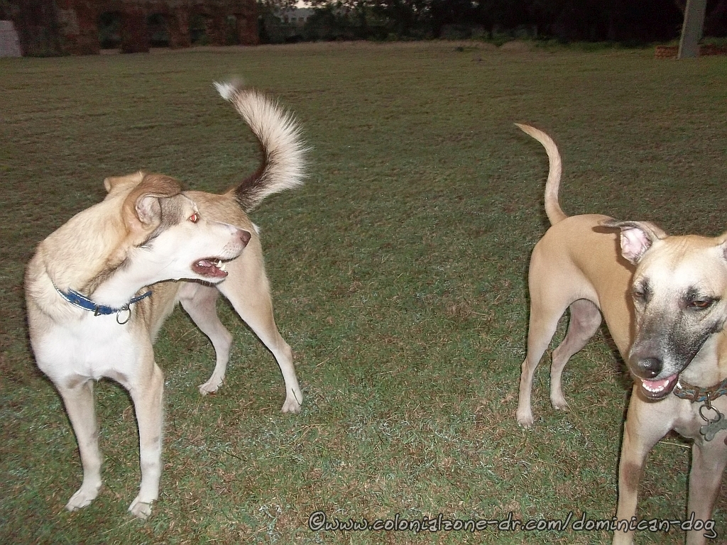 Teli and Buenagente playing