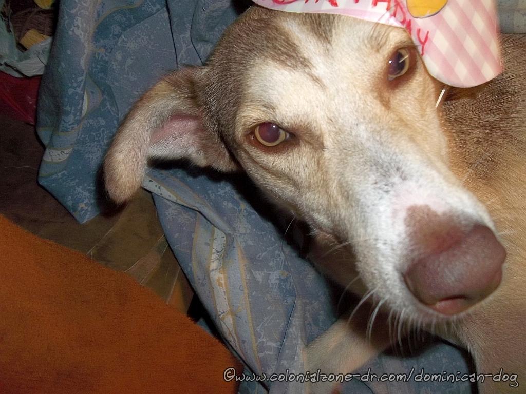 Buenagente not liking his hat at Telis' Birthday