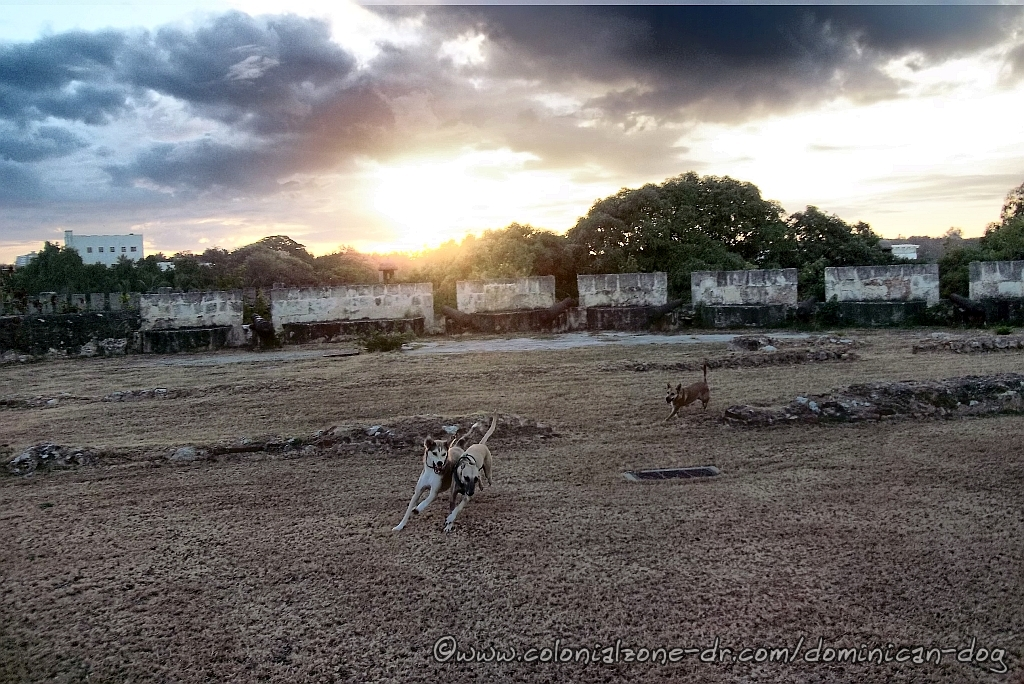 Our (me, Buenagente and Zippy) morning romp as the sun was rising at Fortaleza Ozama.