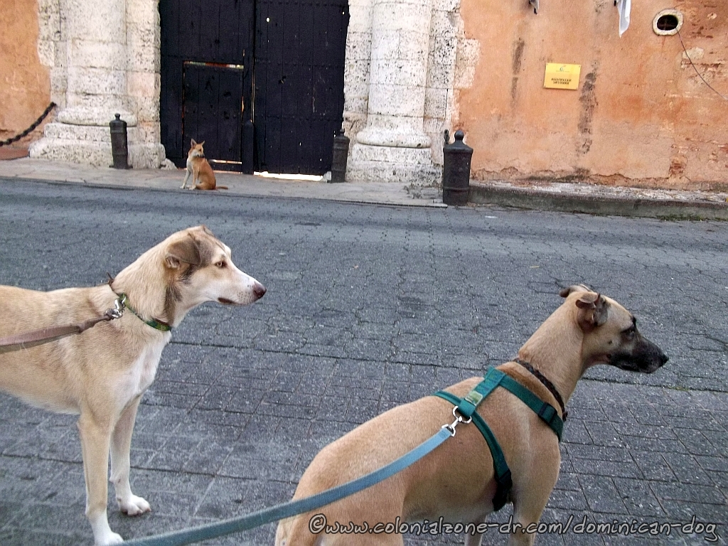 Teli, Buenagente and Zippy waiting for the Fortaleza Ozama door to open