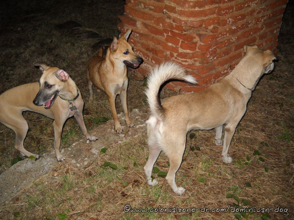 Zippy playing with Buenagente and I. Zippy is in the middle with the big ears.