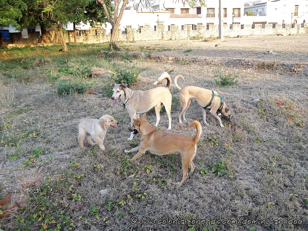 Zippy playing with friends