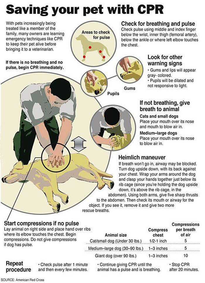 American Red Cross information on Saving a Pet With CPR