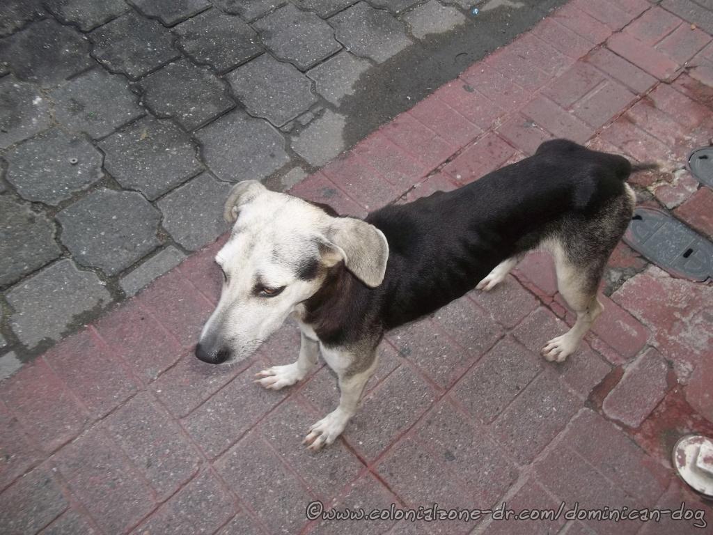 Street dog - Poky
