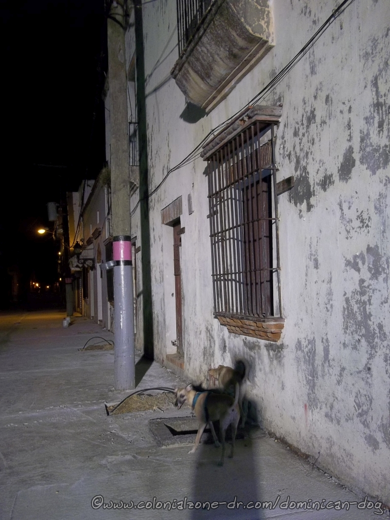 Dog watching Teli and Buenagente with head sticking out of hole in the door