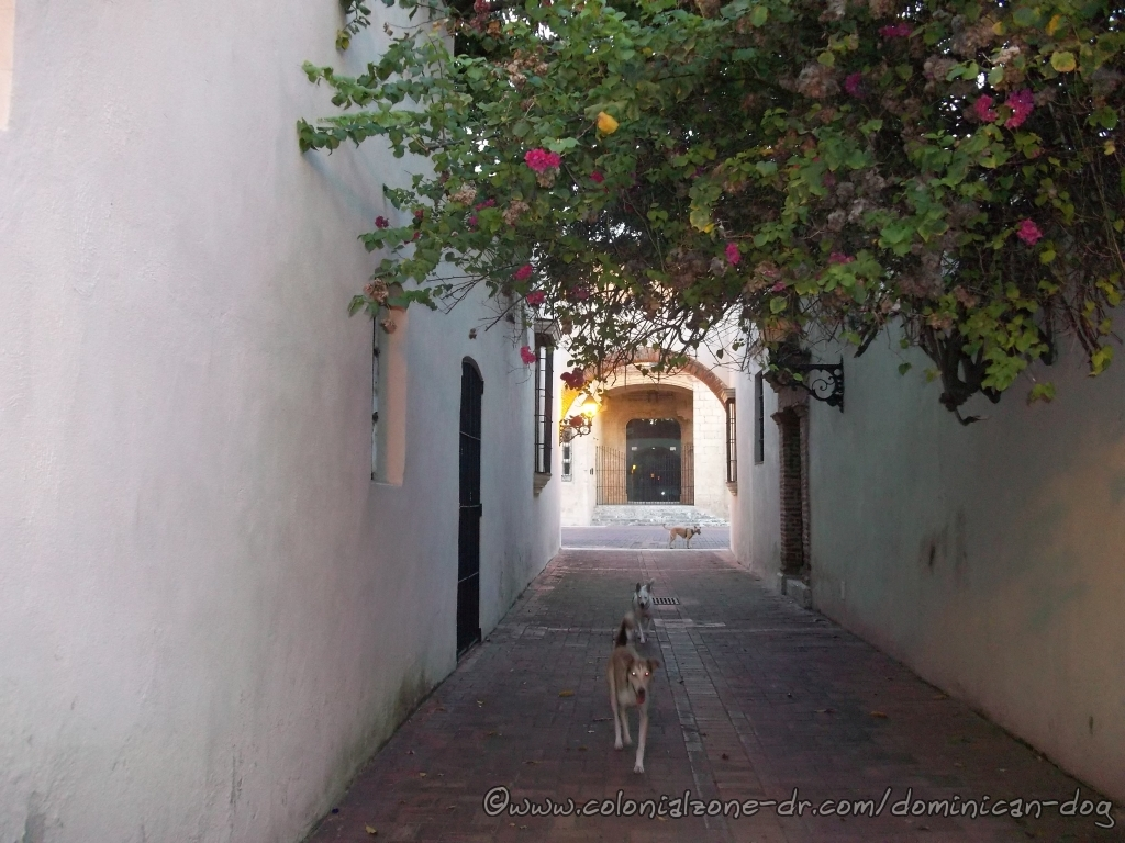 Buenagente and Lola going for water while Teli waits for Zippy at the Callejónde los Curas
