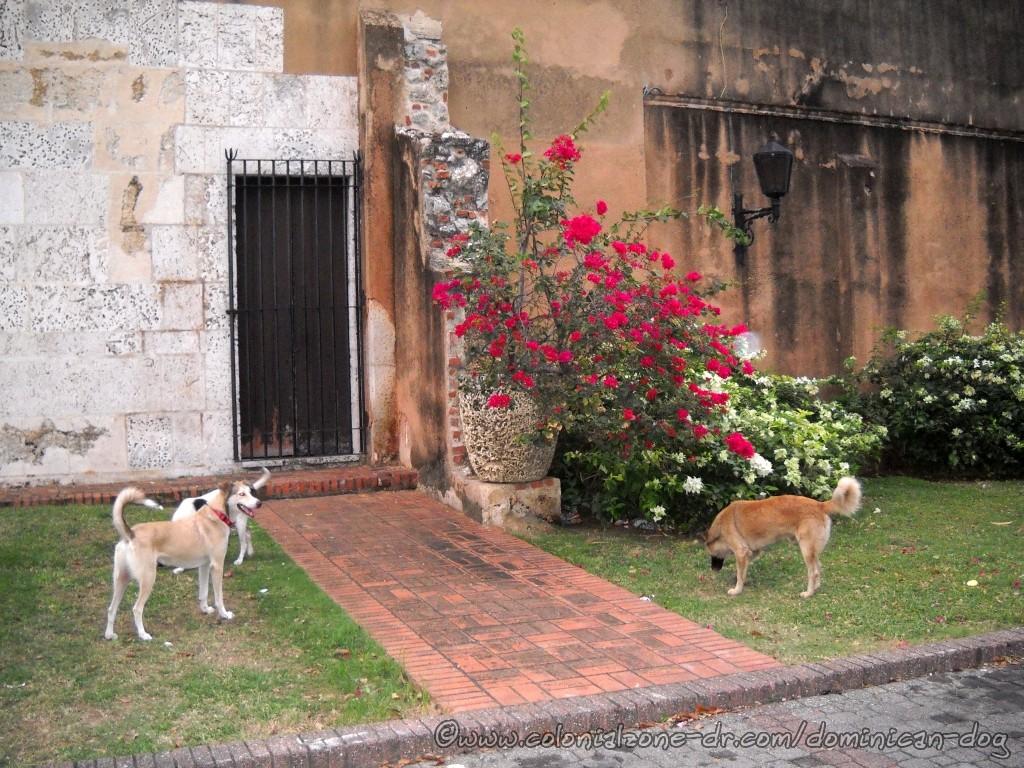 Buenagente, Beza and Fuzzy