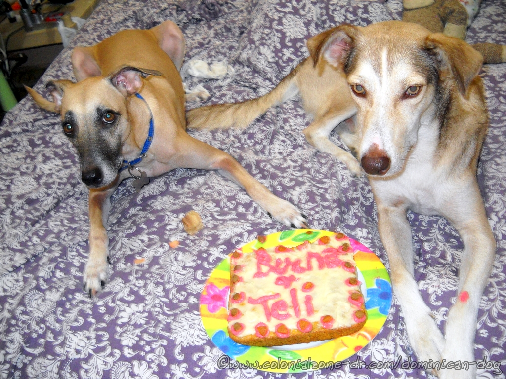 A Popeyes Chicken Birthday Cake Really This Could Have: Dominican Dogs Birthday Party 2015