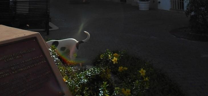 Parque-Rosado-Beza-rainbow-04-6-11-2015