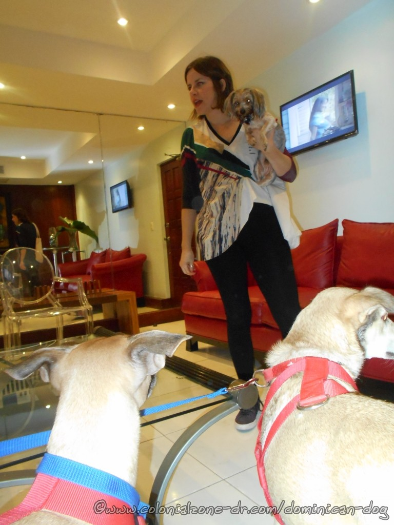 Fifi and her baby come into the green room