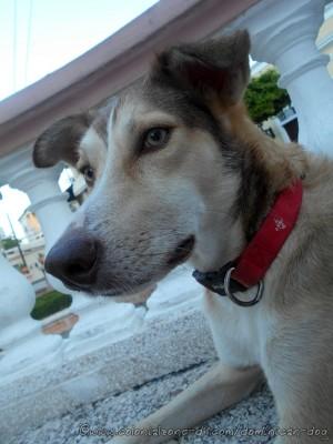 Buena-model-03-8-10-2015(dogblog)