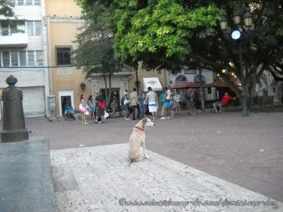 Buena-watching-tourists-Parque-Colon-01-4-16-2015(fbd)(dogblog)