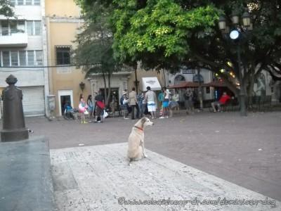 Buena-watching-tourists-Parque-Colon-01-4-16-2015(fbd)(dogblog)