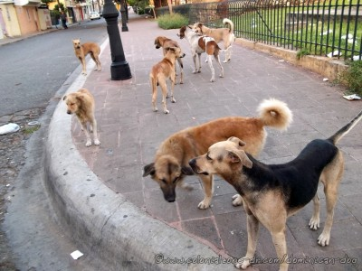 dogs-ruinas-in-heat-01-9-12-2014(fb)(dogblog)