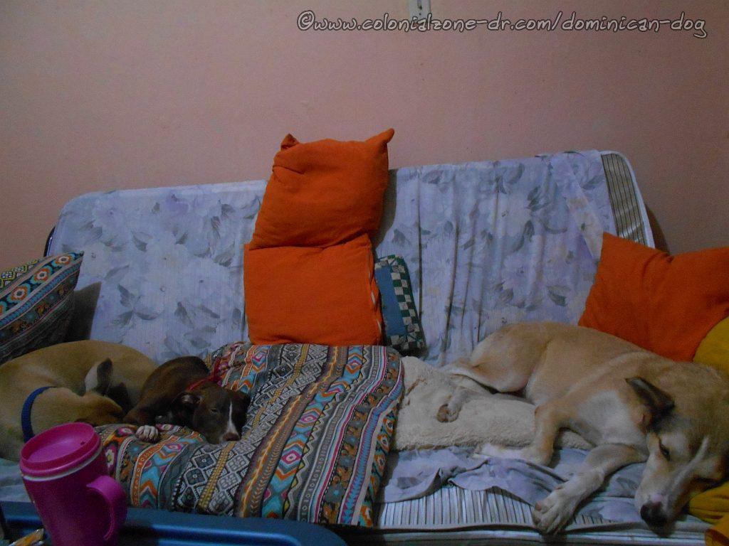 Inteliperra, Dinky and Buenagente sound asleep on the sofa.