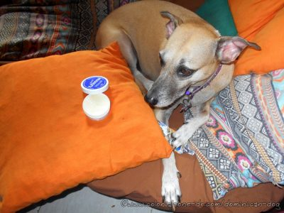 Hot Outside. Protect the paws with Mushers Secret.