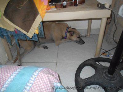 Thunder storm refuge. Inteliperra in her favorite sleeping spot.