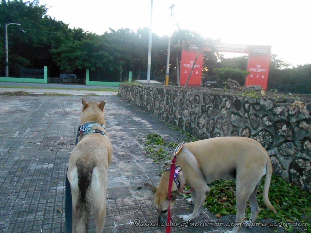 Buenagente and Inteliperra at the entrance of Parque Mirador Del Este where  the World Tennis Invitational and the Special Olympics Global Athletes Congress / Invitacional Mundial de Tenis y el Congreso Global de Atletas de Olimpiadas Especiales