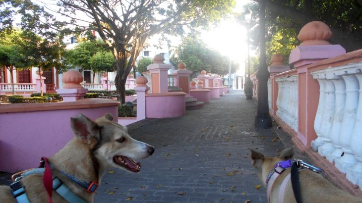 At Parque Rosado, Plaza Pellerano Castro. Inteliperra and Buenagente are happy to be in their old territory in the Colonial Zone.