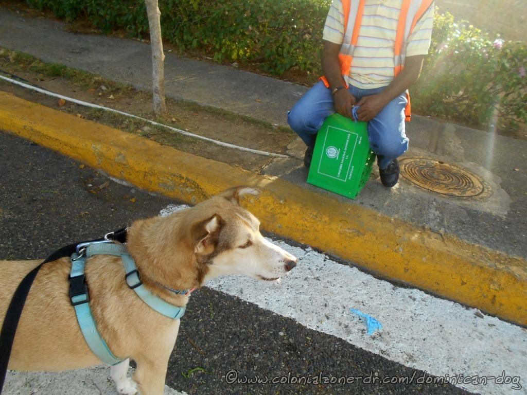 Buenagente barking at his echo at Puerto San Souci