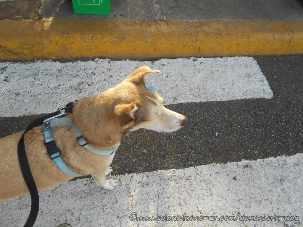 Buenagente listening to his echo at Puerto San Souci